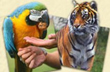Parrot and Tiger